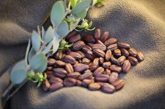 jojoba-beans