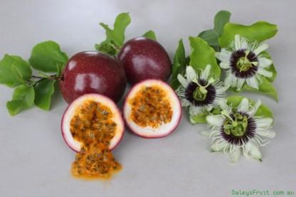 Passionfruit-Panama-Red-Pandora-946