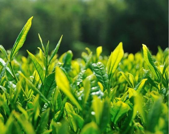 0000049_diatea-green-tea-mix-250gm_760