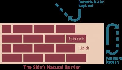 SkinBarrier_Eng-400x229.png